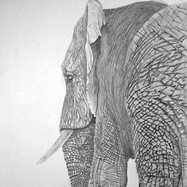 Noise Behind by Paul Murray - Drawing All Drawing ( pencil, elephant, wildlife, realism, drawing )