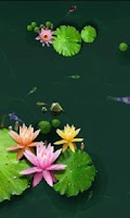 Screenshot of Koi Fish Pond 3D Livewallpaper