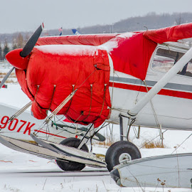 Skis or Pontoons by Leslie Nu - Transportation Airplanes ( ak, snow, ak landscape, palne, skis pontoons )