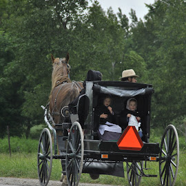 Back From Market by Virginia Hurley - People Family ( buggy, horse, mennonite, travel )