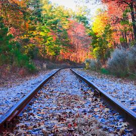Tracks into the light by Carol Plummer - Transportation Railway Tracks ( railway, autumn, train, transportation, tracks, sun,  )