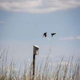 The Encounter by Laura Gardner - Novices Only Wildlife ( sky, nature, landscapes & wildlife, nd, outdoors, summer, wildlife, audobon national wildlife refuge, birds, hiking )
