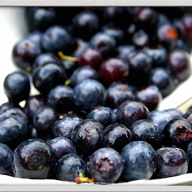 Blueberry picking by Charity William - Food & Drink Fruits & Vegetables ( fruit, blueberry, fresh, healthy,  )