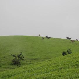 Grass Land by Ponprasath Vairavanathan - Nature Up Close Leaves & Grasses