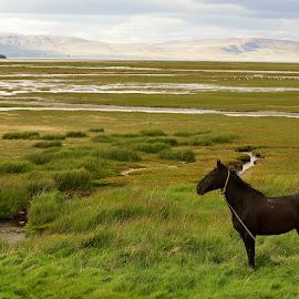 Patagonia by Pier Riccardo Vanni - Landscapes Prairies, Meadows & Fields