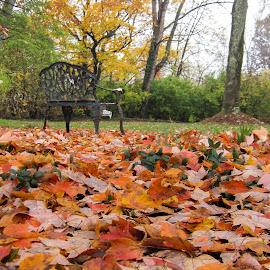 Carpet of Leaves by Cheryl Caffarella Wilson - Landscapes Prairies, Meadows & Fields ( autumn scene, autumn leaves, autumn, park bench, autumn colors, fall, color, colorful, nature )