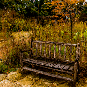 Lonely Bench by Tina Hailey - Artistic Objects Furniture ( minnesota arboretum, bench, fall colors, trees, tinas capture moments, , public, furniture, object, fall, color, colorful, nature, relax, tranquil, relaxing, tranquility )