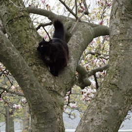 Cat in the tree by Theresa Campbell - Animals - Cats Playing