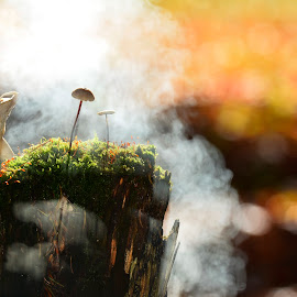 forest mushrooms by Alah Ja Ja Bin - Nature Up Close Mushrooms & Fungi ( mushroom, fungi, nature, autumn, color, fall, moss, forest, colorfull, close up, smoke, photography )