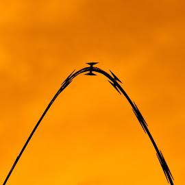 Razor Wire by Kathleen Koehlmoos - Abstract Patterns ( orange, theft deterrent, keep it simple, razor wire, orange sky, simplify,  )