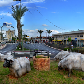 Memorable places. by Leonid Nozdrachov - City,  Street & Park  City Parks ( road, israel, memorable places., panorama, tel aviv, city )
