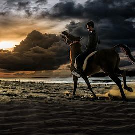 by Hema Photography - Animals Horses