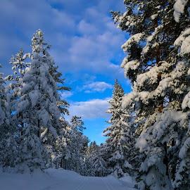 Endelig sesongens første skitur! Og for en postkortstemning! by Anngunn Dårflot - Landscapes Forests