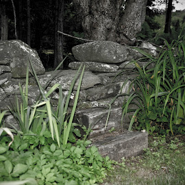 Step on Over by Micki Ortiz - Nature Up Close Rock & Stone ( garden entry, rock wall, vermont, rocks, natural )