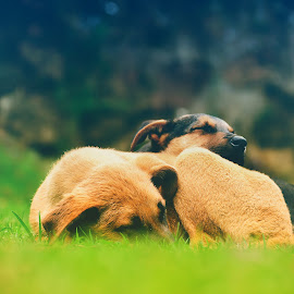 calm by Meghnath P Bala - Animals - Dogs Puppies ( puppies, dogs, nature, peace, sleep, baby, young, animal )