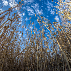by Victor Martin - Nature Up Close Leaves & Grasses