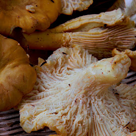 Chantrelles are popping in Oregon by Liz Hahn - Food & Drink Eating
