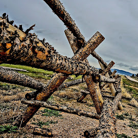 Log Fence by Barbara Brock - Buildings & Architecture Other Exteriors ( ranch fence, wyoming fence, log fence, rustic fence )