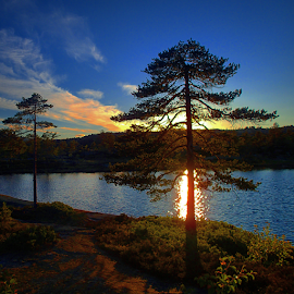 Burning tree by Geir Hammer - Nature Up Close Trees & Bushes ( water, sky, sun set, tree, nature, waterscape, sunset, skyporn, sunshine, sun, norway, skyscape )