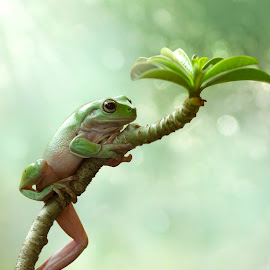Summer by Kurito Afsheen - Animals Amphibians