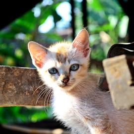 Hey by Aditya Hari Antara - Animals - Cats Kittens ( pet portrait, pet photography, kitten, cat, pet, cute cat, kitty,  )