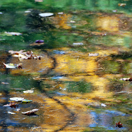 Autumn Waterscape by Edd Rose - Nature Up Close Water ( abstract, nophotoshop, reflection, autumn, squiggle )