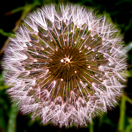 weed seed by LADOCKi Elvira - Nature Up Close Other Natural Objects ( nature, seed )