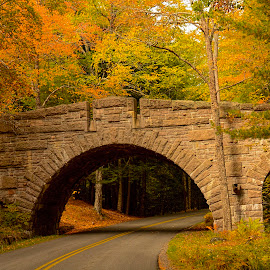 Acadia by Gene Myers - Buildings & Architecture Bridges & Suspended Structures ( shotsbygene, maine, autumn, color, fall, strone, trees, road, bridge, leaves, acadia park, gene myers, colorful, nature )