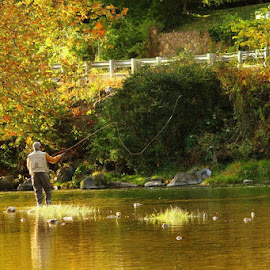 Fly Fishing  by Shelby Mcghee - Sports & Fitness Other Sports ( water, fall colors, fall, fishing, river, fly fishing )