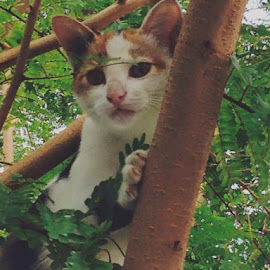 Climbing-tree Kitten by Nazrai Zabidi - Animals - Cats Kittens