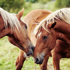 to be in touch by SeiDa - Animals Horses ( touch, horse, couple,  )
