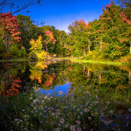 Spider Lake Color by Gary Hanson - Landscapes Forests ( autumn, color, road, spider lake, pond )