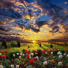 Peace I Leave With You by Phil Koch - Landscapes Prairies, Meadows & Fields ( vertical, photograph, farmland, yellow, storm, leaves, love, sky, nature, tree, autumn, shadow, snow, flower, wind, orange, twilight, agriculture, horizon, portrait, dawn, winter, environment, season, national geographic, serene, trees, floral, inspirational, wisconsin, natural light, tulips, phil koch, spring, photography, sun, farm, ice, horizons, rain, inspired, clouds, office, park, green, scenic, morning, shadows, wild flowers, field, red, blue, sunset, fall, peace, meadow, summer, sunrise, earth, landscapes,  )