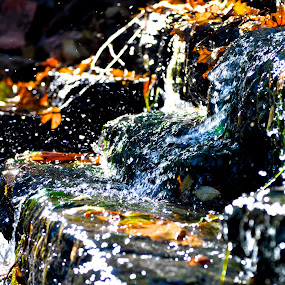 Little waterfall  by Stephanie Hampton - Nature Up Close Water ( okc, water, oklahoma, waterfall )