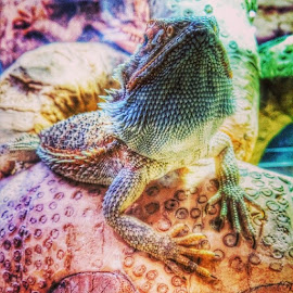 by Jonny Wood - Instagram & Mobile Android ( Beardeddragon, beardeddragons )