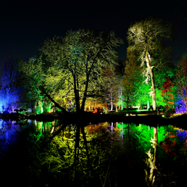 Night Lights by Vineet Johri - Nature Up Close Trees & Bushes ( enchanted woodland, colorful night picture, water reflection, night lights, vkumar photography, syon park )