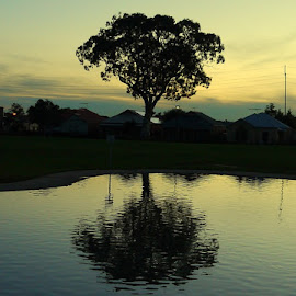 Peace on The Pond by Leigh Martin - City,  Street & Park  Skylines ( tree reflection pond dusk evening,  )
