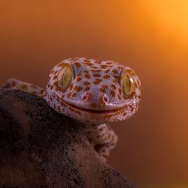 I'm Here by Kutub Macro-man - Animals Reptiles ( macro, nature, reptile, close-up, animal )