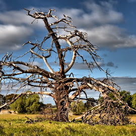 Tree depleted of life by Feona Green-Puttock - Nature Up Close Trees & Bushes ( barren, old, tree, majestic, dead,  )
