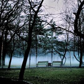 Evening fog by Marina Chivu - City,  Street & Park  City Parks