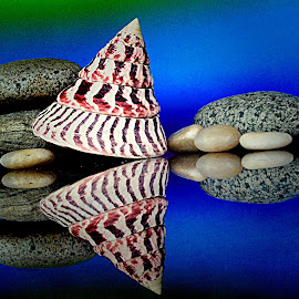 Seashell and stones by Janette Ho - Artistic Objects Still Life (  )