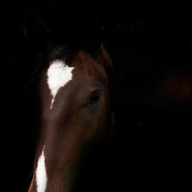 From the shadow by Chene Emmerick - Animals Horses ( horse )