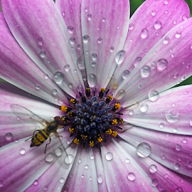 by Dipali S - Instagram & Mobile Android ( water, android, purple, drops, daisy, arthropoda, pink, insect )