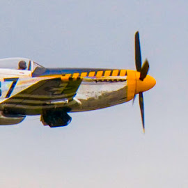 by Steve Marra - Transportation Airplanes ( p-51 mustang )
