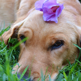Grass nap by Isabelle Largen - Animals - Dogs Portraits