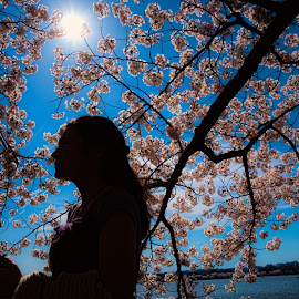 Silhouette of a girl in cherry blossoms by Walt Mlynko - Nature Up Close Gardens & Produce ( generic event, nature, what, event, object, botanical, dc trip, cherry blossoms )