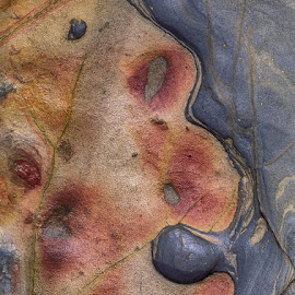 Rockface #2 by Jim Downey - Nature Up Close Rock & Stone ( monterey, pt. lobos, sandstone, beach, wet )