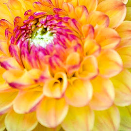 by Gabriela Gabriella - Nature Up Close Gardens & Produce