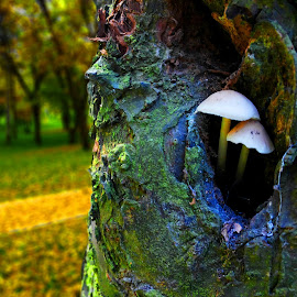by Vukosava Radenovic - Nature Up Close Mushrooms & Fungi