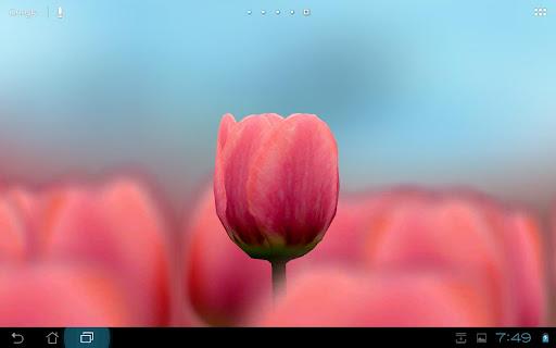 3D Tulip Live Wallpaper Free